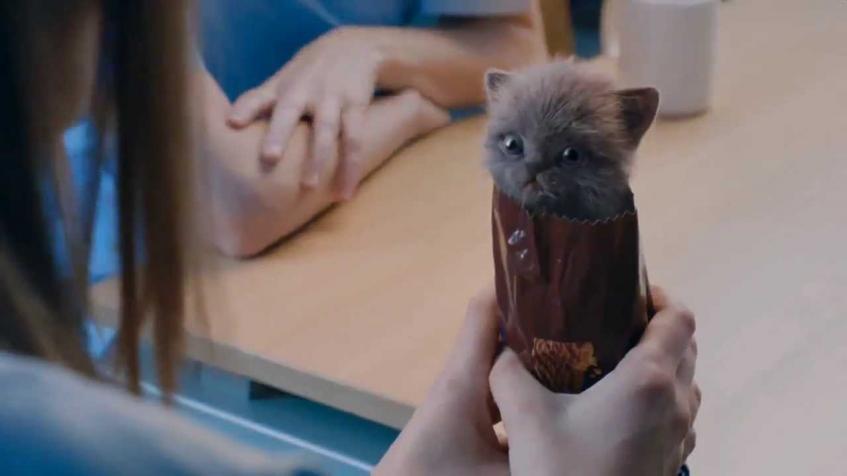McVities Digestives kitten