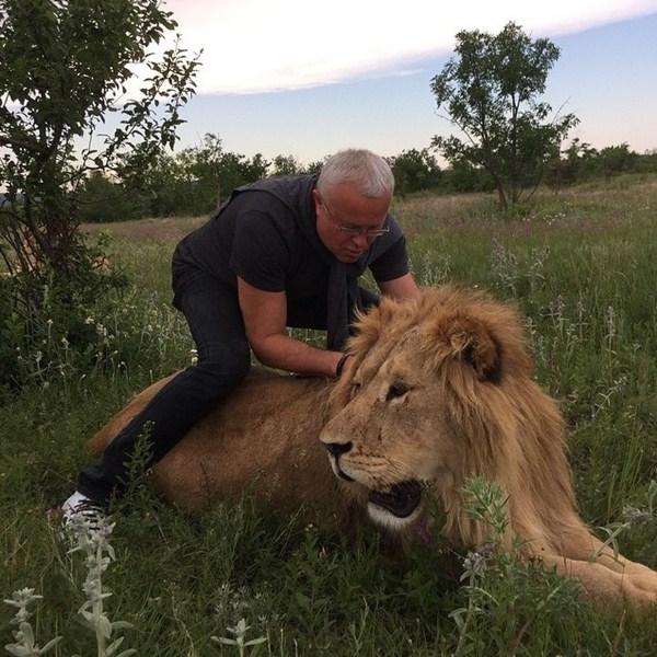 Александр Лебедев тягался со львом.