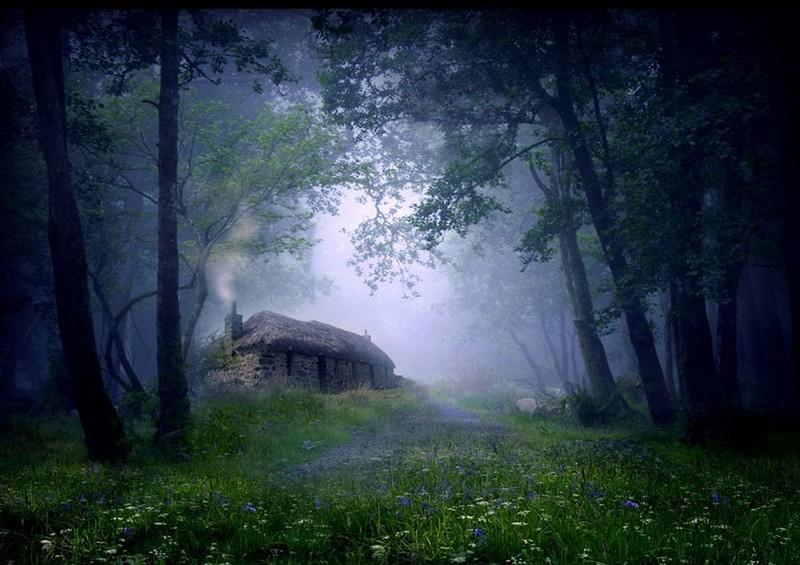 Коттедж в лесу. Шотландия.