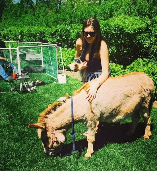 Виктория Крутая нежилась в объятиях американского пони.
