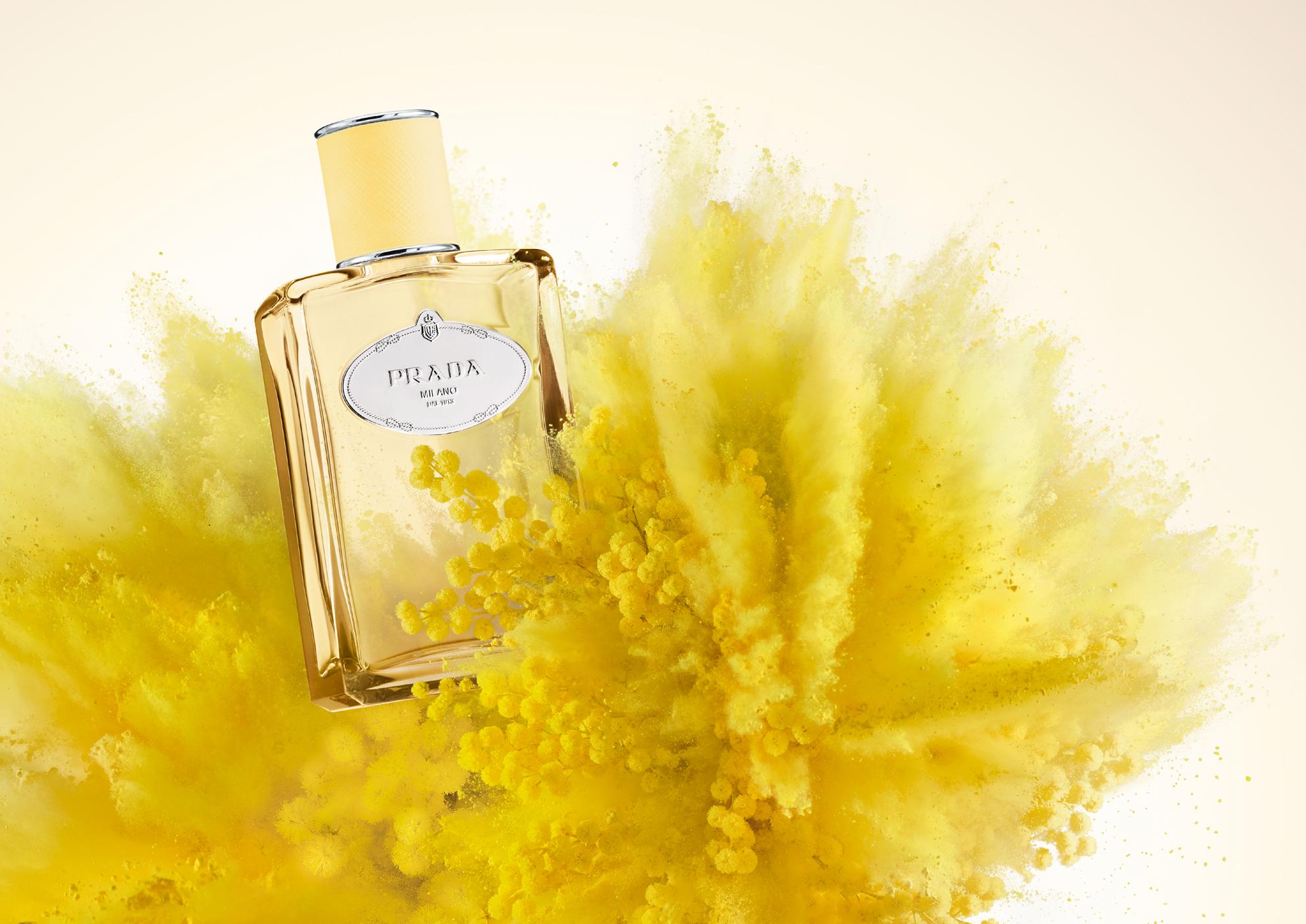 Mimosa Prada