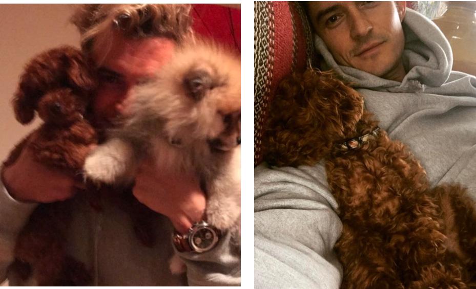 Орландо Блум с собакой Кэти Перри