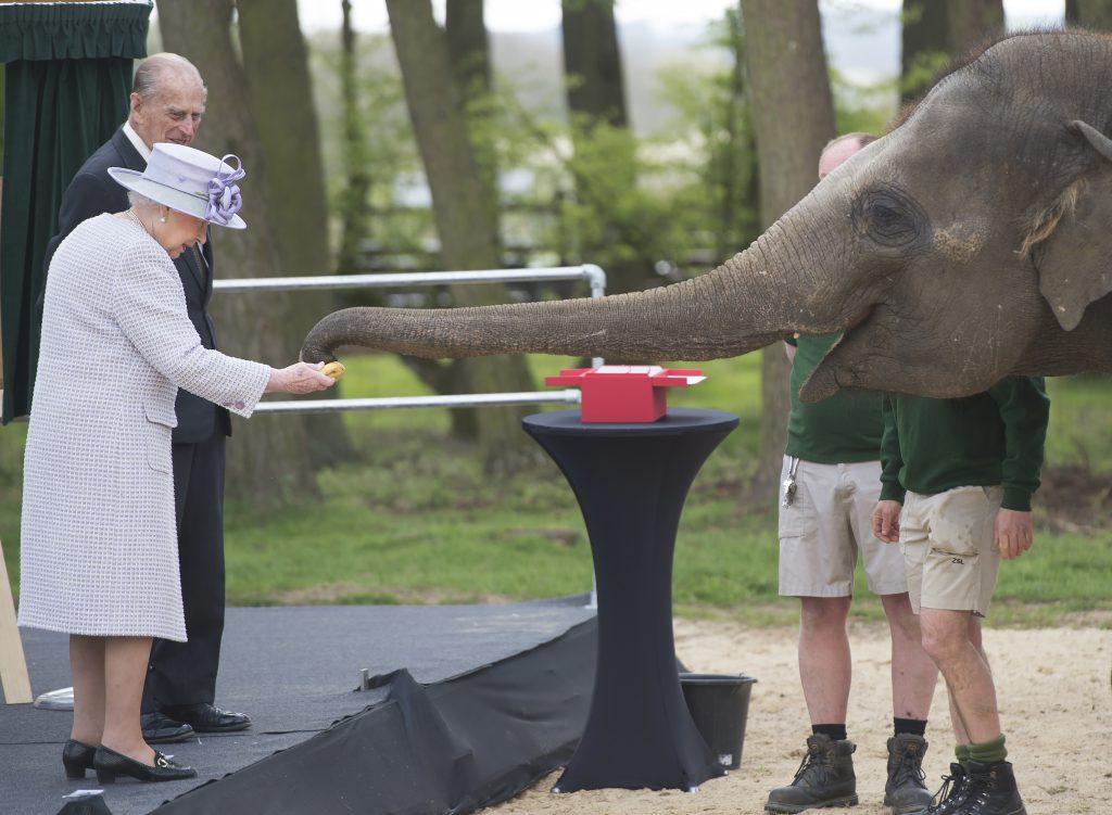 Королева Елизавета и герцог Филипп со слонихой Донной, апрель