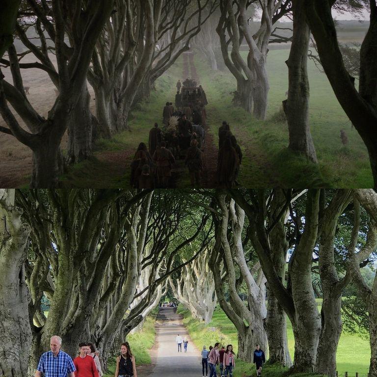 Дорога Вестероса королевский тракт (наверху) - это аллея Дарк-Хеджесиз буковых деревьев в Северной Ирландии
