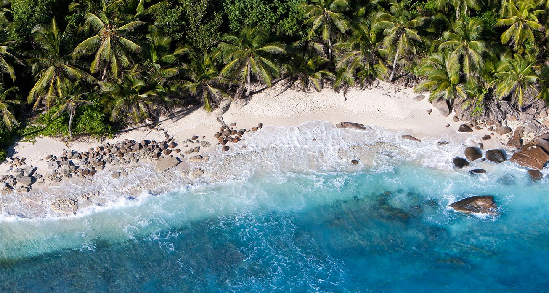 Лучший пляж в мире, черепахи и кокосовый ром: зачем лететь на Сейшелы
