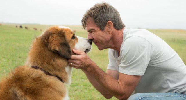 Doggy style с комфортом! Самые неприхотливые породы собак