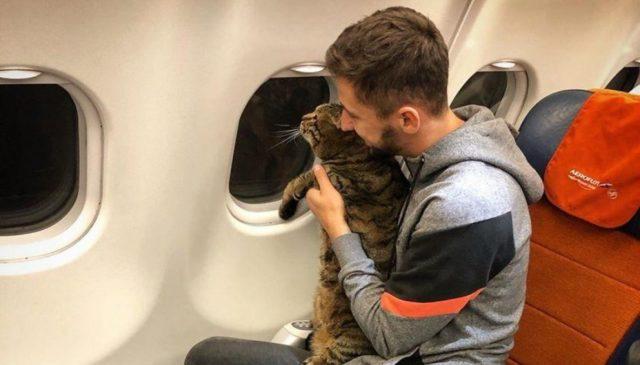 Дискриминация по весу! Толстого кота не пустили в самолет
