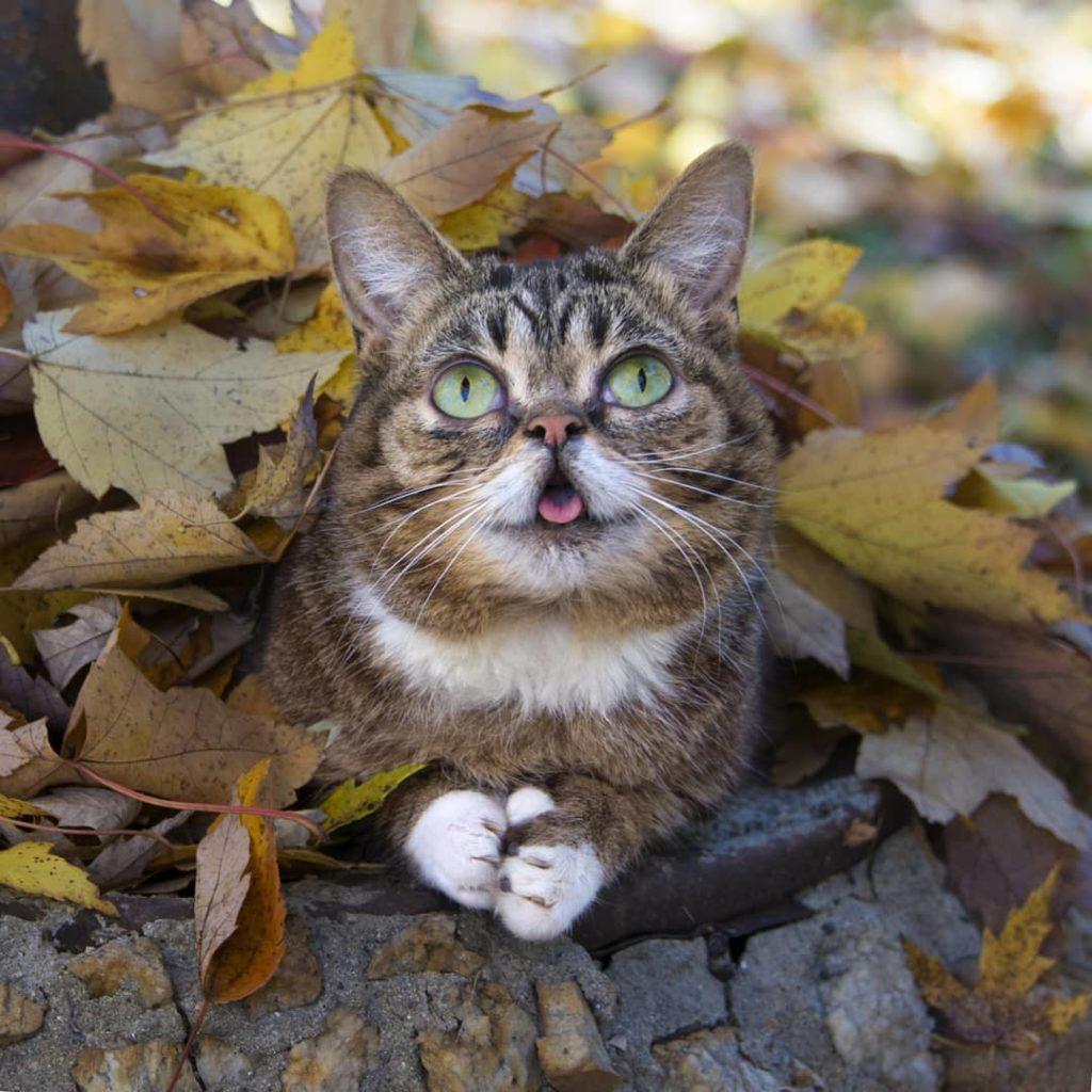 Самая грустная новость дня: умерла знаменитая кошка-мем свысунутым язычком
