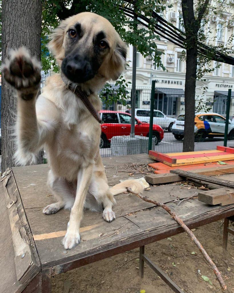 Полное имя собаки - Грузия
