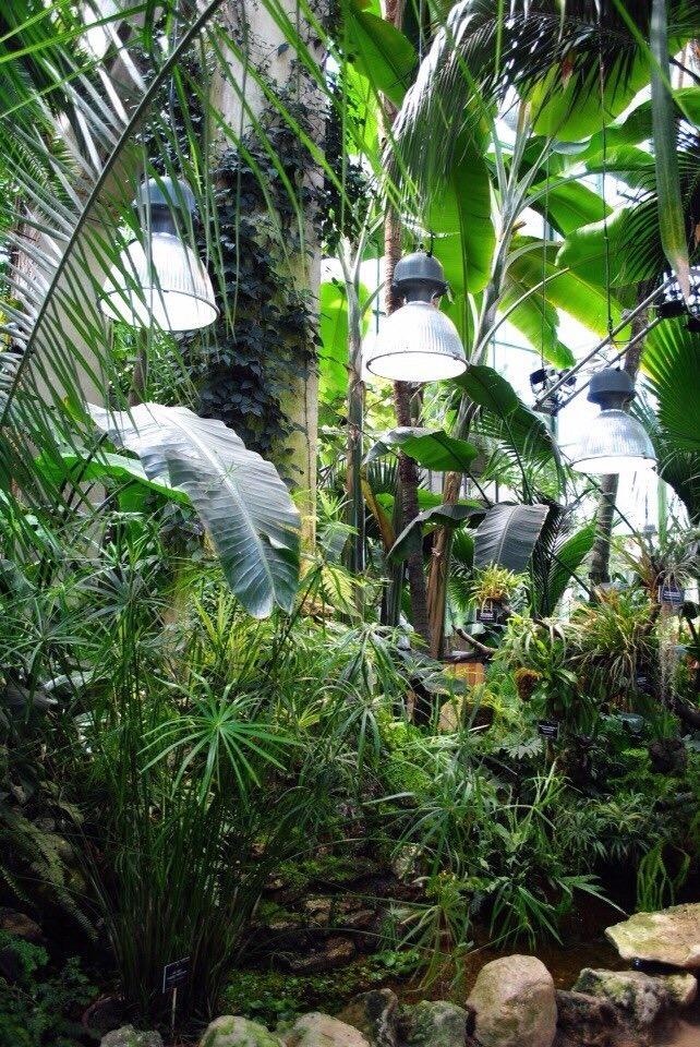 Ботанический сад МГУ «Аптекарский огород»