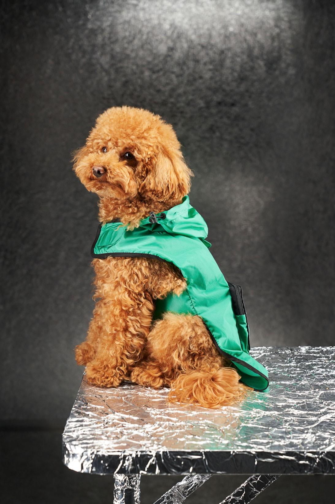https___hypebeast.com_wp-content_blogs.dir_6_files_2020_11_moncler-genius-poldo-dog-couture-petwear-3