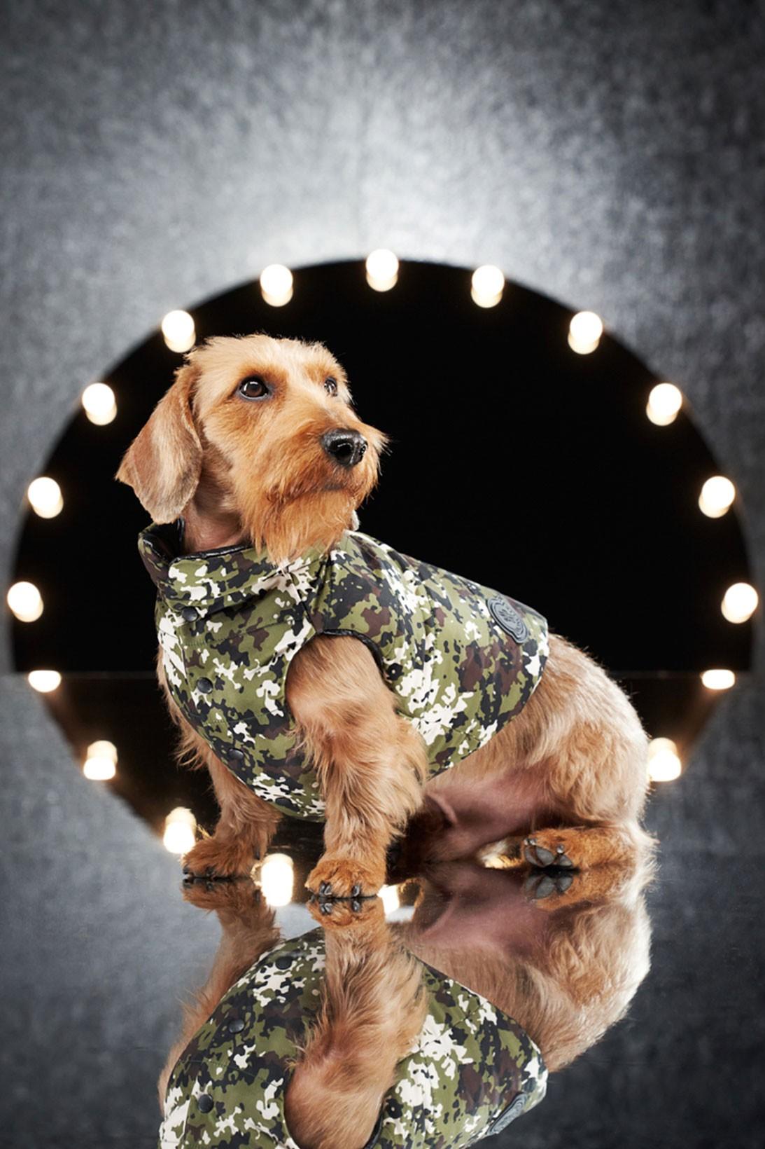 Коллаборация Мoncler Genuis с Poldo Dog Couture